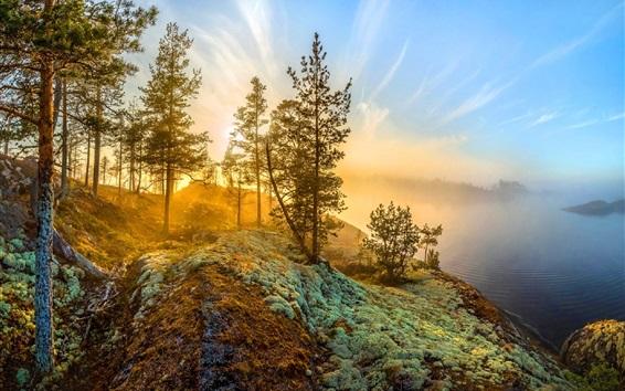 Wallpaper Trees, lake, fog, sunshine, morning