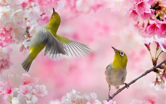 Wallpaper Two birds, pink sakura, flowers, spring