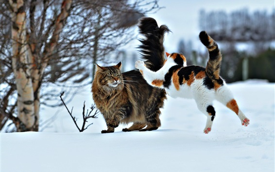 Wallpaper Two cats play games in the snow