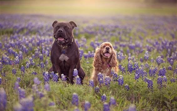 Wallpaper Two dogs, meadow, blue lupine flowers