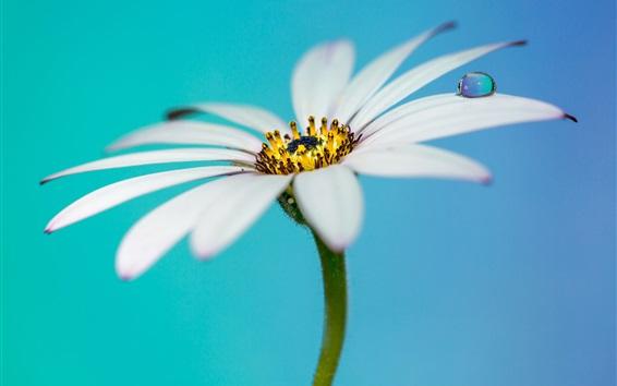 Wallpaper White flower, petals, water drops, bokeh
