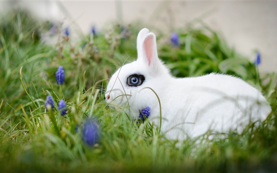 Обои Белый кролик, трава, цветы