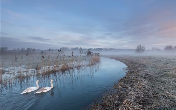 Wallpaper White swans, river, fog, morning