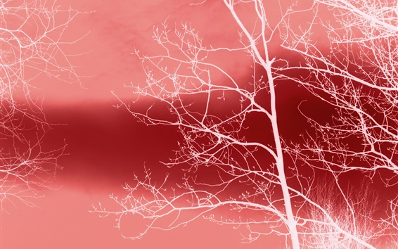 Wallpaper White trees, red background, abstract design