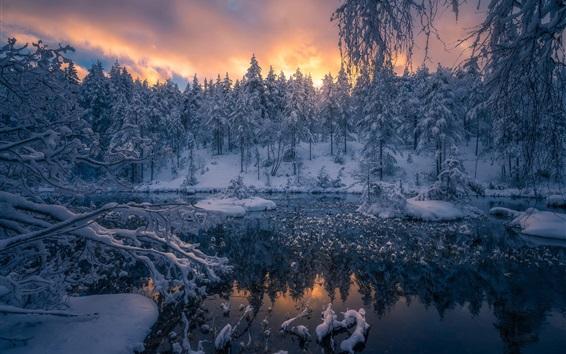 壁紙 冬、雪、森林、木々、リンゲリーケ、ノルウェー