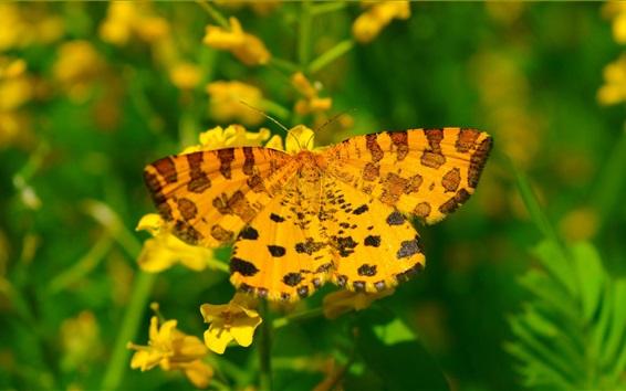 壁紙 黄色い蝶、夏