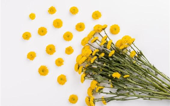 Papéis de Parede Margarida amarela, buquê, fundo branco