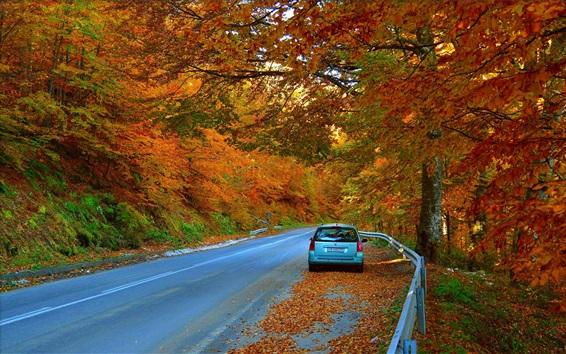 Wallpaper Autumn, trees, road, car