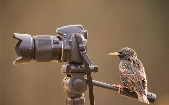 Papéis de Parede Pássaro olha para a câmera