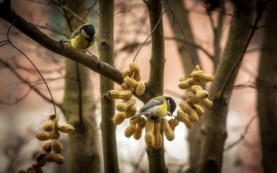 Wallpaper Bird, peanut, trees