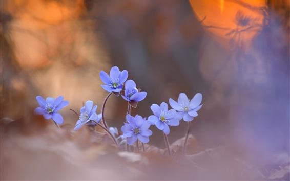 Wallpaper Blue little flowers, blurry background