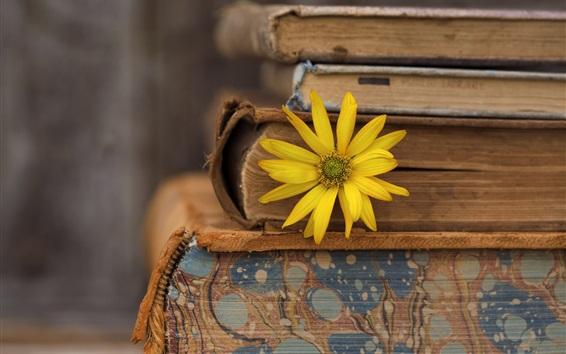 Wallpaper Books, yellow flower