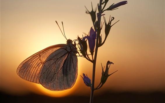 Обои Бабочка, цветы, подсветка