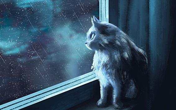 Обои Кот смотрит на окно, дождливый, художественная фотография