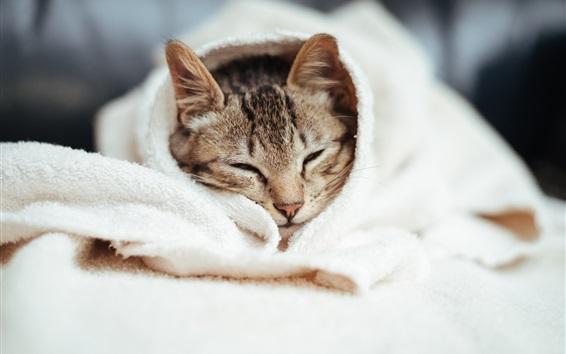 Wallpaper Cat sleep, woollen blanket