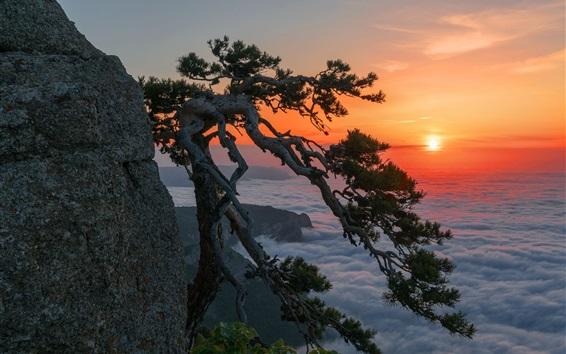 Fond d'écran Crimée, Russie, pin, falaise, aube, lever du soleil