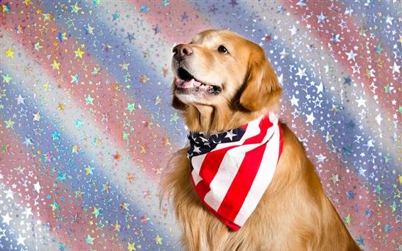 Wallpaper Cute dog, US flag scarf