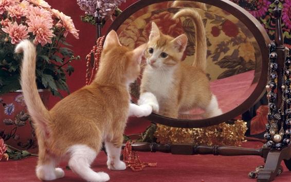 Обои Симпатичный котенок смотреть на зеркало