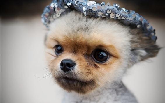 Fondos de pantalla Lindo perrito, gorra, animales divertidos