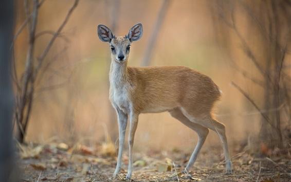 Wallpaper Deer, bokeh