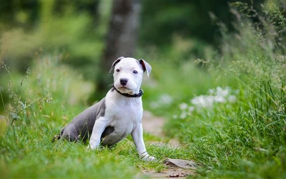 Обои Собака, зеленая трава, лето