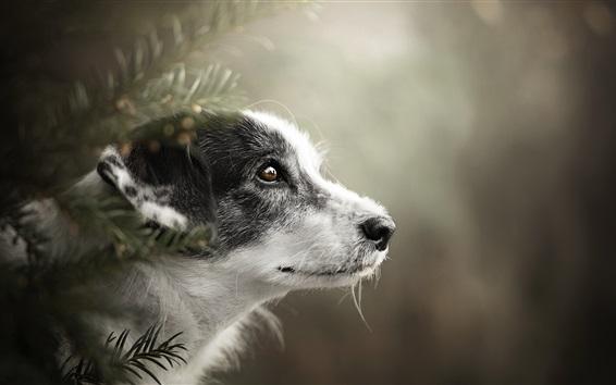 Wallpaper Dog side view, head, eye, bokeh