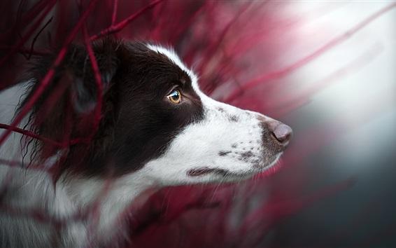 Обои Вид сбоку собаки, голова, глаза, боке