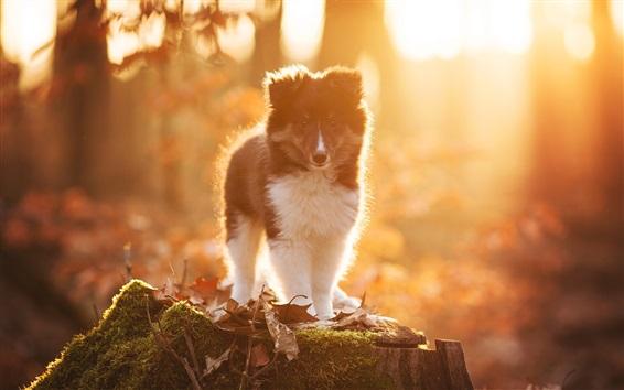 Papéis de Parede Cão, luz solar, floresta