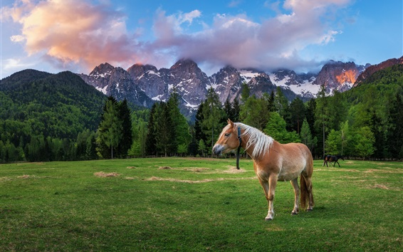 Wallpaper Dolomites, Alps, horse, grass