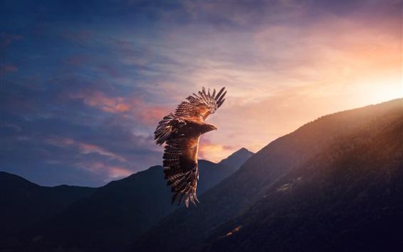 Fond d'écran Vol de l'aigle, soleil, montagnes