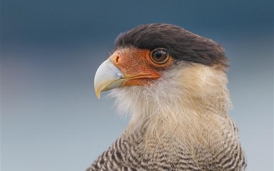 Papéis de Parede Eagle olha para o lado, cabeça, bico, olhos