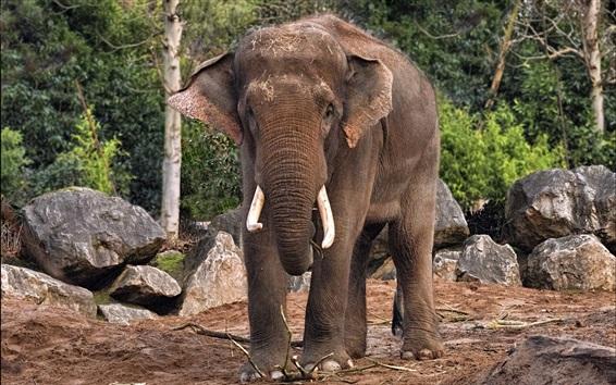 Wallpaper Elephant, rocks