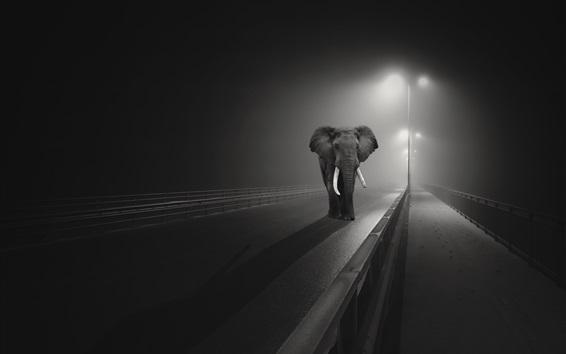 Wallpaper Elephant walk on the bridge, night, lights, black and white picture