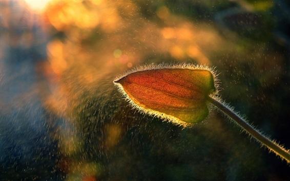 Wallpaper Flower macro photography, rain