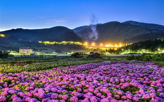 Wallpaper Flowers fields, night, houses, lights