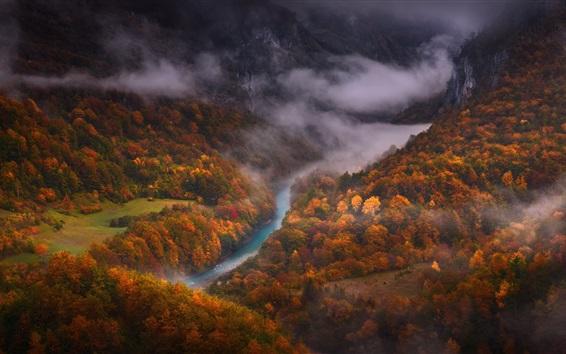 Papéis de Parede Floresta, outono, rio, vista de cima, nevoeiro