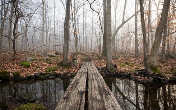 Papéis de Parede Floresta, riacho, ponte de madeira, nevoeiro