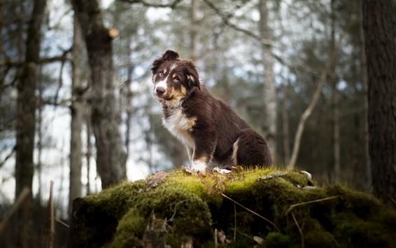 Papéis de Parede Floresta, cachorro, musgo