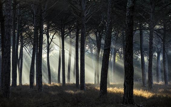 Wallpaper Forest, sun rays, grass, trees