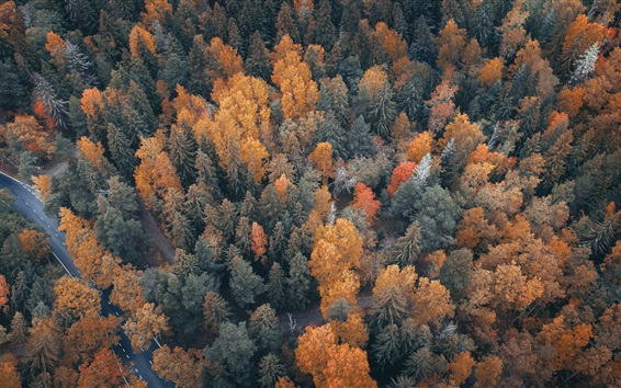 Wallpaper Forest top view, trees, road, autumn