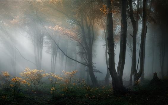 壁紙 森林、木々、霧、霧、朝