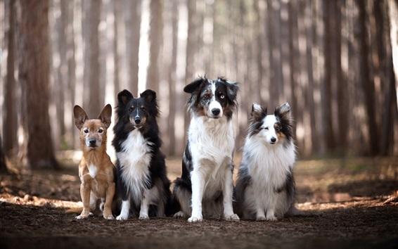 Fondos de pantalla Cuatro perros, amigos, bosque