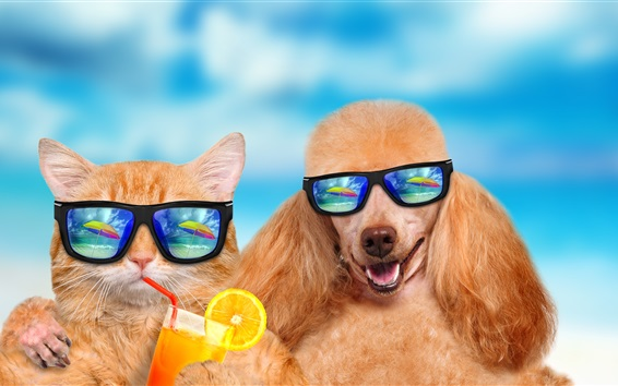 Wallpaper Funny animals, cat and dog, sunglasses, drinks