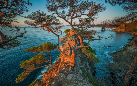Обои Полуостров Гамов, Россия, море, скалы, деревья