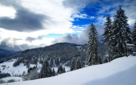 Wallpaper Germany, Baden-Wurttemberg, winter, snow, forest