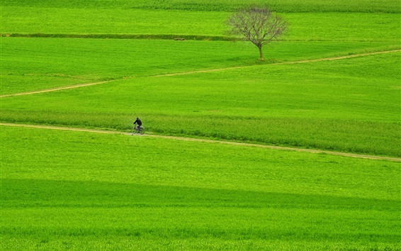 Wallpaper Green fields, farmland