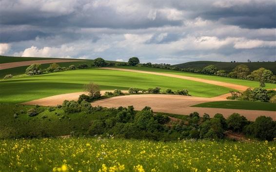 Wallpaper Green fields, road, spring