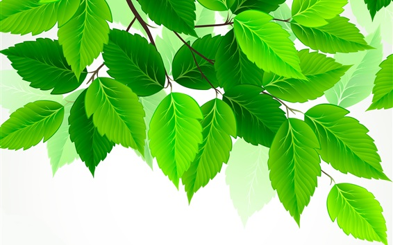 Wallpaper Green leaves, white background, art picture