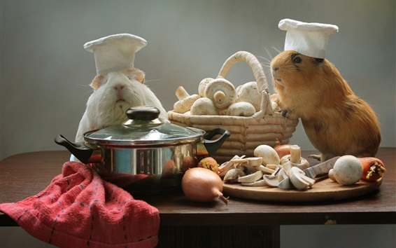 Papéis de Parede Cobaias, cozinheiros, cogumelos, panela, animais engraçados
