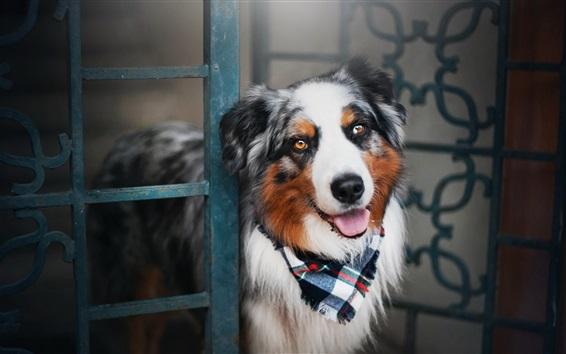 Wallpaper Happy dog, door